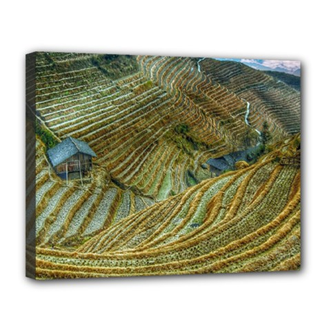 Rice Field China Asia Rice Rural Canvas 14  X 11  by Celenk