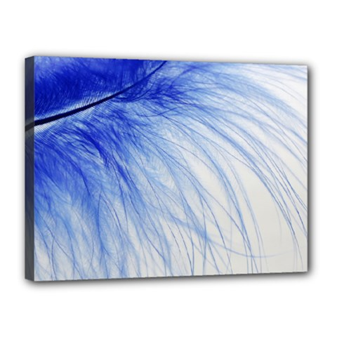 Feather Blue Colored Canvas 16  X 12  by Nexatart