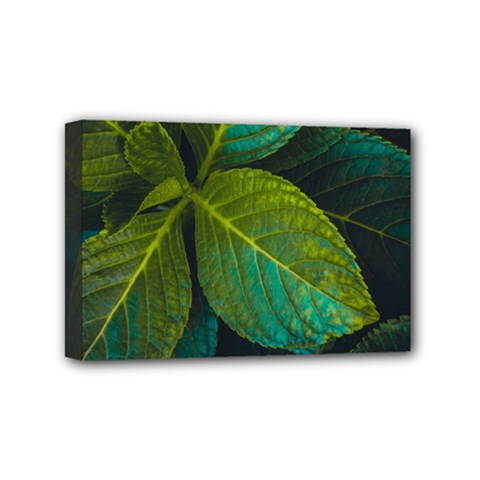 Green Plant Leaf Foliage Nature Mini Canvas 6  X 4