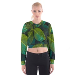 Green Plant Leaf Foliage Nature Cropped Sweatshirt by Nexatart
