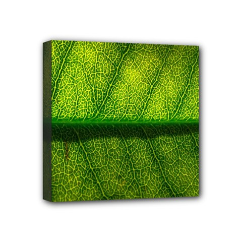 Leaf Nature Green The Leaves Mini Canvas 4  X 4