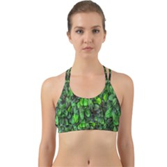 The Leaves Plants Hwalyeob Nature Back Web Sports Bra