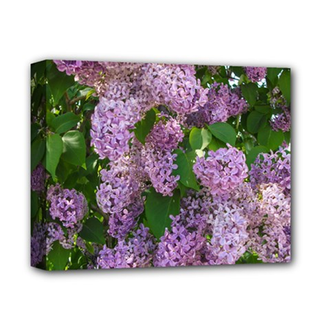 Lilacs 2 Deluxe Canvas 14  X 11  by dawnsiegler