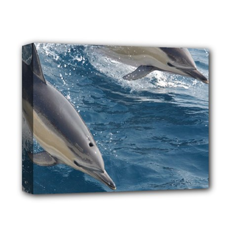 Dolphin 4 Deluxe Canvas 14  X 11  by trendistuff