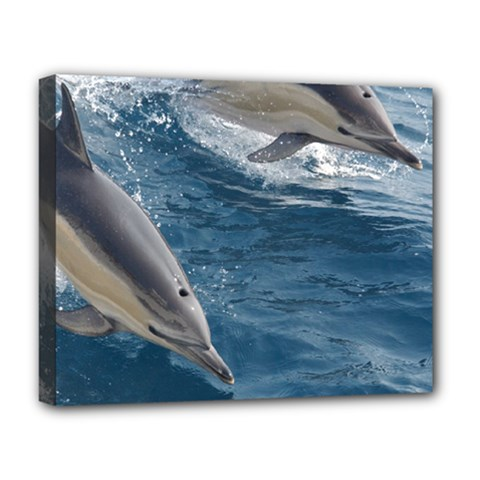 Dolphin 4 Deluxe Canvas 20  X 16   by trendistuff