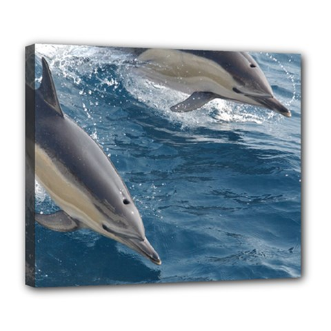 Dolphin 4 Deluxe Canvas 24  X 20   by trendistuff