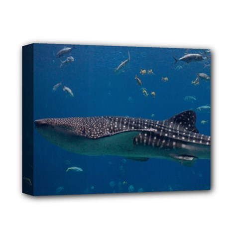 Whale Shark 1 Deluxe Canvas 14  X 11  by trendistuff
