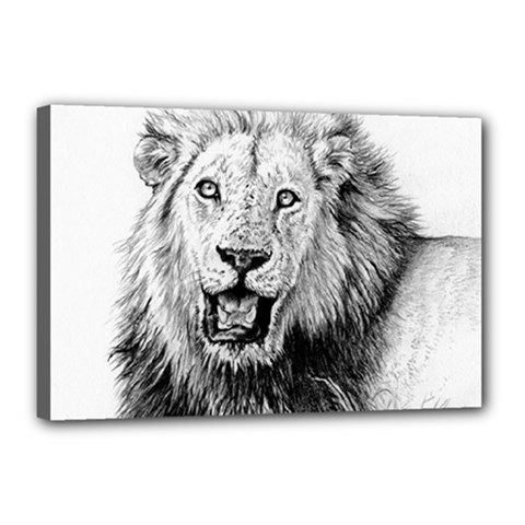 Lion Wildlife Art And Illustration Pencil Canvas 18  X 12