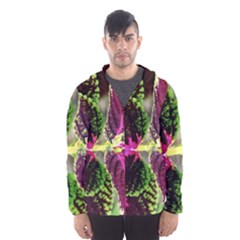 Plant Purple Green Leaves Garden Hooded Wind Breaker (men) by Nexatart