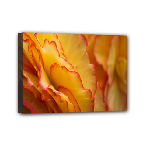 Flowers Leaves Leaf Floral Summer Mini Canvas 7  X 5  by Nexatart