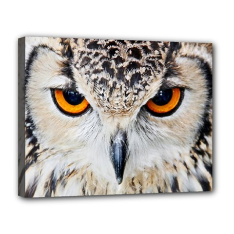 Owl Face Canvas 14  X 11