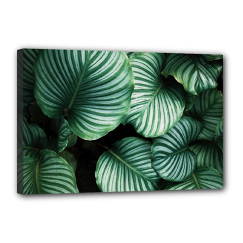 Tropical Florals Canvas 18  X 12  by goljakoff
