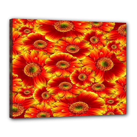 Gerbera Flowers Nature Plant Canvas 20  X 16  by Sapixe