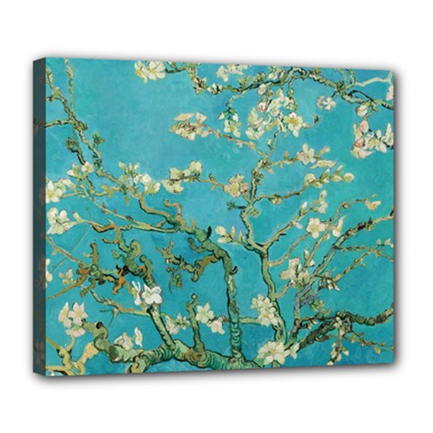 Almond Blossom  Deluxe Canvas 24  X 20