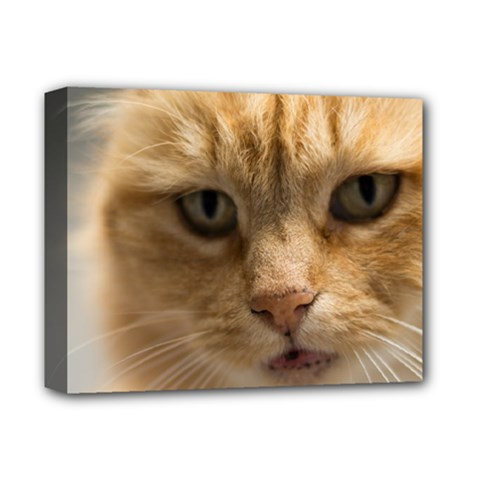 Animal Pet Cute Close Up View Deluxe Canvas 14  X 11  by goodart