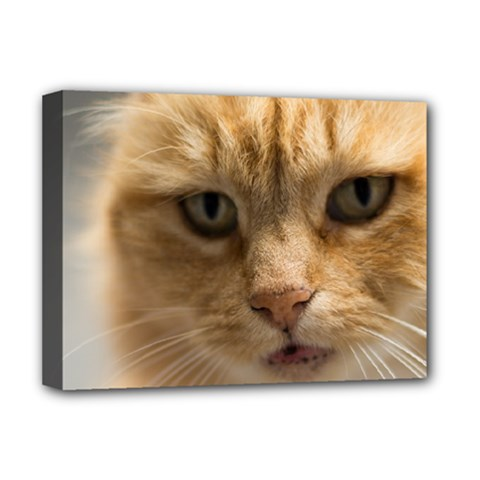 Animal Pet Cute Close Up View Deluxe Canvas 16  X 12   by goodart
