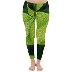 Leaf Green Foliage Green Leaves Classic Winter Leggings by Simbadda