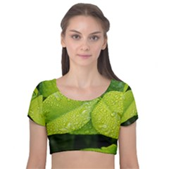Leaf Green Foliage Green Leaves Velvet Short Sleeve Crop Top  by Simbadda
