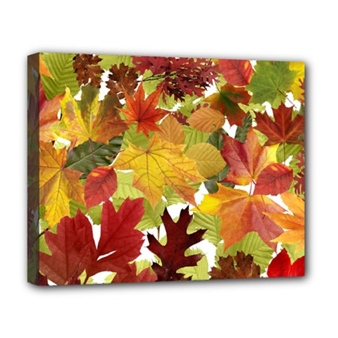 Autumn Fall Leaves Deluxe Canvas 20  X 16   by LoolyElzayat