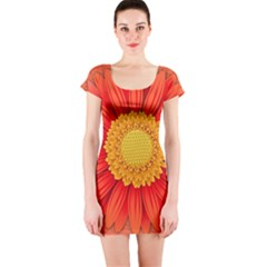 Flower Plant Petal Summer Color Short Sleeve Bodycon Dress by Sapixe