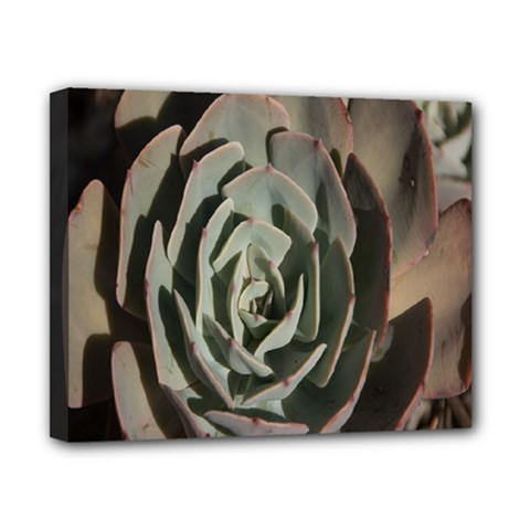 Succulent Green Pink Rosettes Canvas 10  X 8  by Sapixe