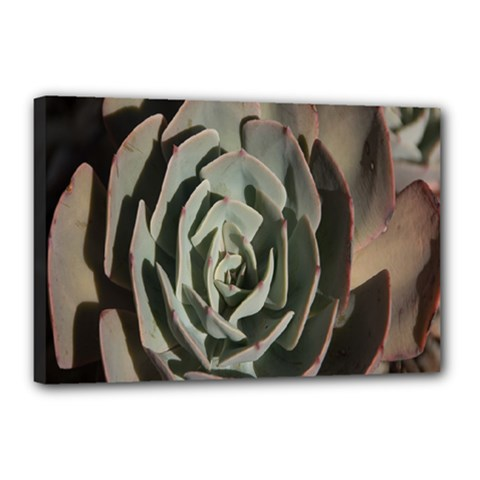 Succulent Green Pink Rosettes Canvas 18  X 12  by Sapixe