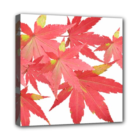 Leaves Maple Branch Autumn Fall Mini Canvas 8  X 8  by Sapixe