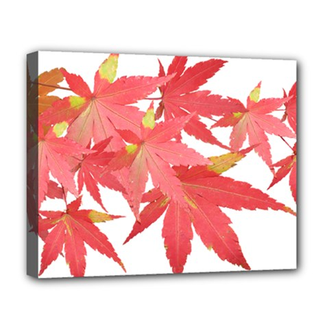 Leaves Maple Branch Autumn Fall Deluxe Canvas 20  X 16   by Sapixe