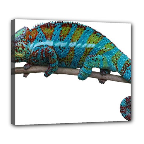 Reptile Lizard Animal Isolated Deluxe Canvas 24  X 20   by Sapixe