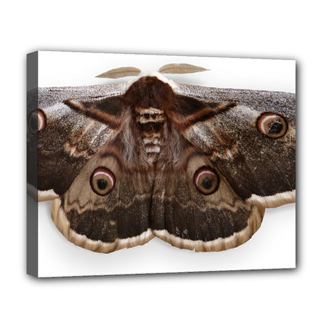 Night Butterfly Butterfly Giant Deluxe Canvas 20  X 16