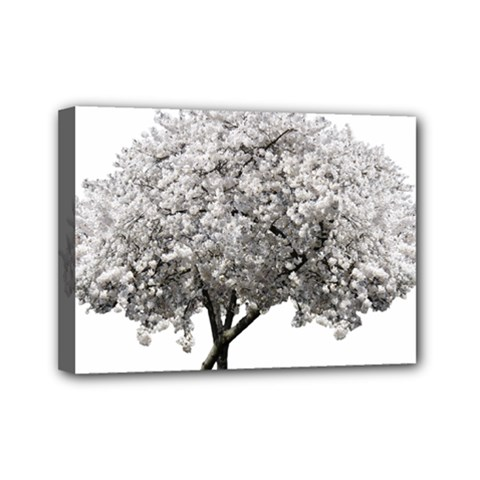 Nature Tree Blossom Bloom Cherry Mini Canvas 7  X 5  by Sapixe