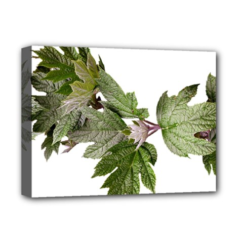 Leaves Plant Branch Nature Foliage Deluxe Canvas 16  X 12   by Sapixe