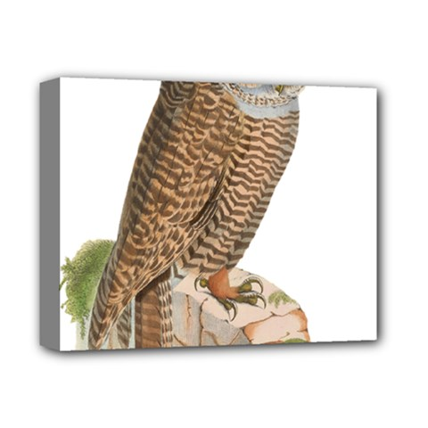 Bird Owl Animal Vintage Isolated Deluxe Canvas 14  X 11
