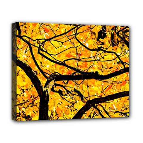 Golden Vein Deluxe Canvas 20  X 16   by FunnyCow