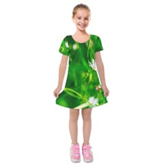 Inside The Grass Kids  Short Sleeve Velvet Dress