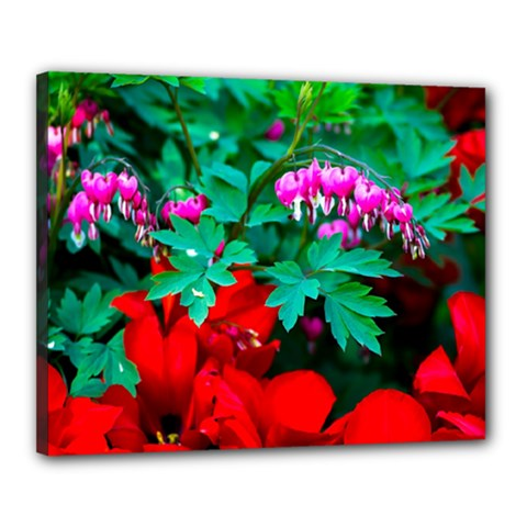 Bleeding Heart Flowers Canvas 20  X 16  by FunnyCow