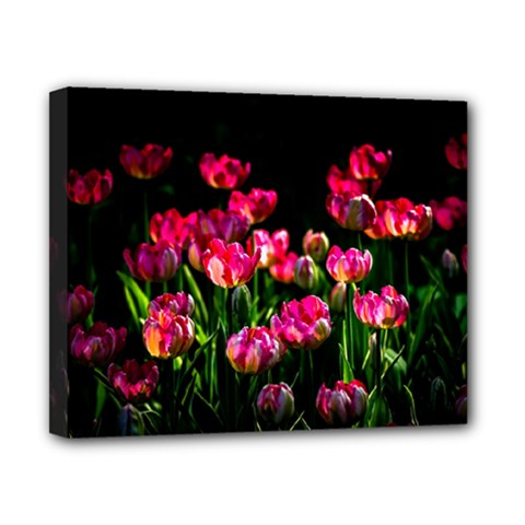 Pink Tulips Dark Background Canvas 10  X 8  by FunnyCow