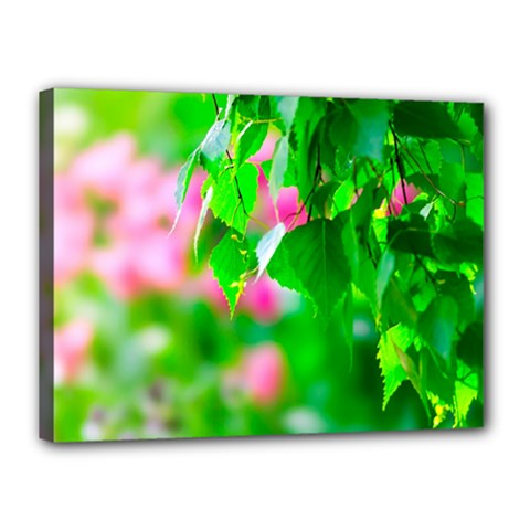 Green Birch Leaves, Pink Flowers Canvas 16  X 12  by FunnyCow