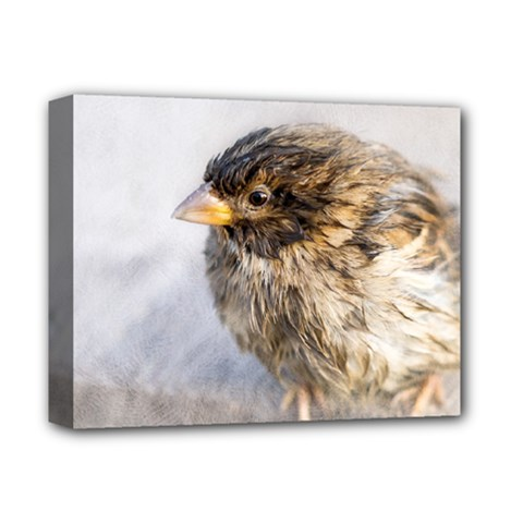 Funny Wet Sparrow Bird Deluxe Canvas 14  X 11  by FunnyCow