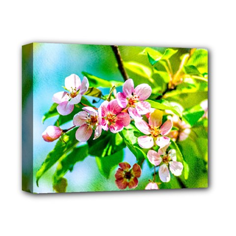 Crab Apple Flowers Deluxe Canvas 14  X 11  by FunnyCow