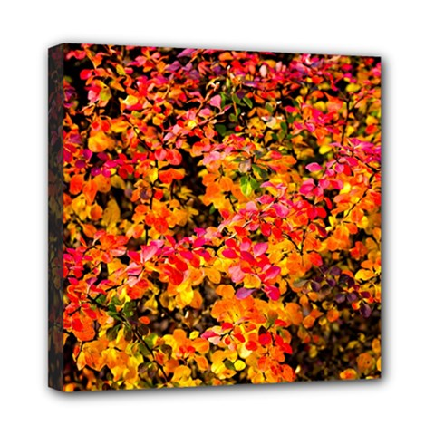 Orange, Yellow Cotoneaster Leaves In Autumn Mini Canvas 8  X 8  by FunnyCow