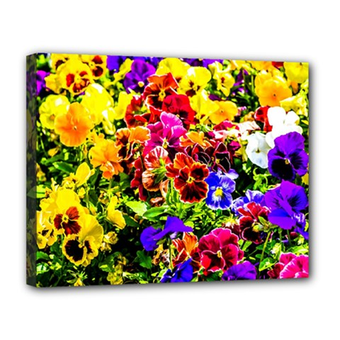 Viola Tricolor Flowers Canvas 14  X 11  by FunnyCow