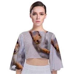 Curious Squirrel Tie Back Butterfly Sleeve Chiffon Top