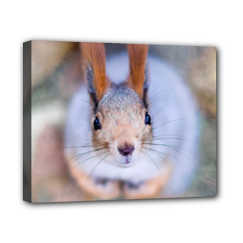 Squirrel Looks At You Canvas 10  X 8  by FunnyCow