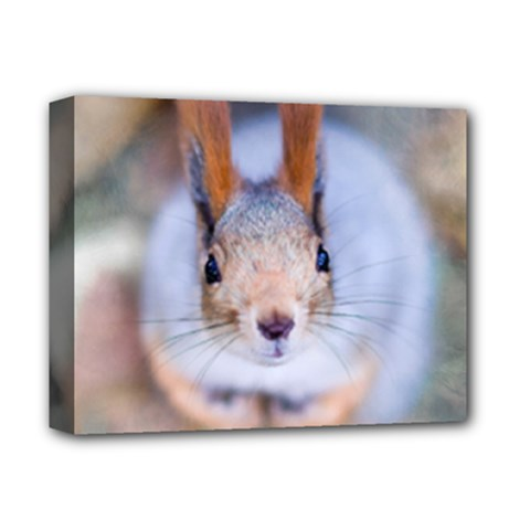 Squirrel Looks At You Deluxe Canvas 14  X 11  by FunnyCow