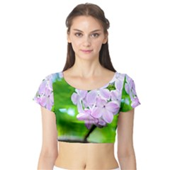 Elegant Pink Lilacs In Spring Short Sleeve Crop Top by FunnyCow