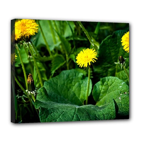 Yellow Dandelion Flowers In Spring Deluxe Canvas 24  X 20   by FunnyCow