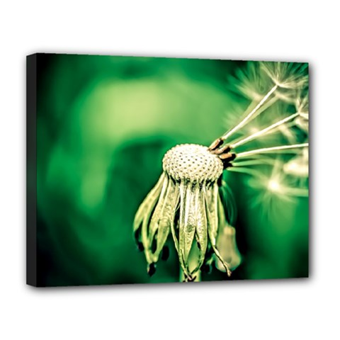 Dandelion Flower Green Chief Canvas 14  X 11  by FunnyCow