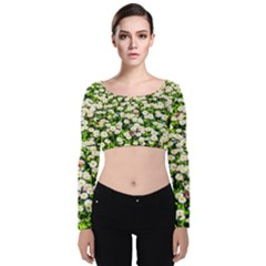 Green Field Of White Daisy Flowers Velvet Crop Top by FunnyCow