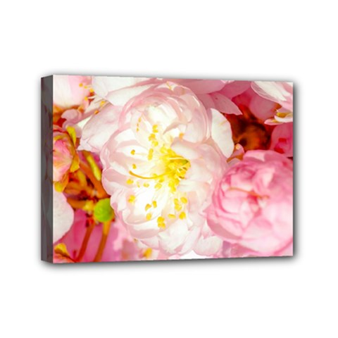 Pink Flowering Almond Flowers Mini Canvas 7  X 5  by FunnyCow